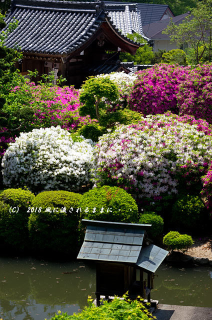 奈良・船宿寺 ツツジが咲き誇る庭園9