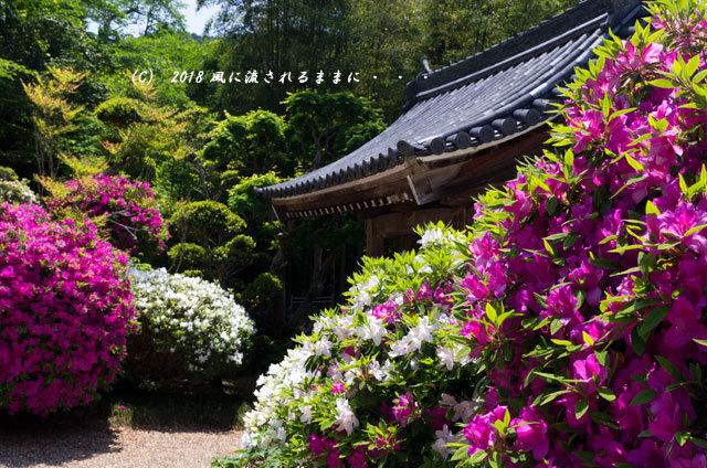 奈良・船宿寺 ツツジが咲き誇る庭園3