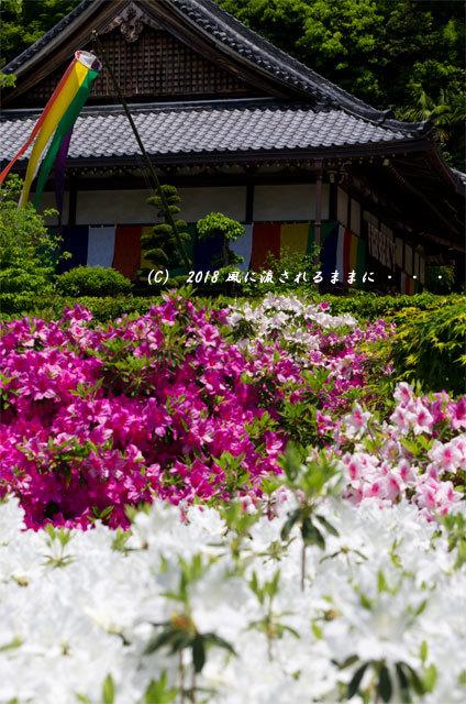奈良・船宿寺 ツツジが咲き誇る庭園4