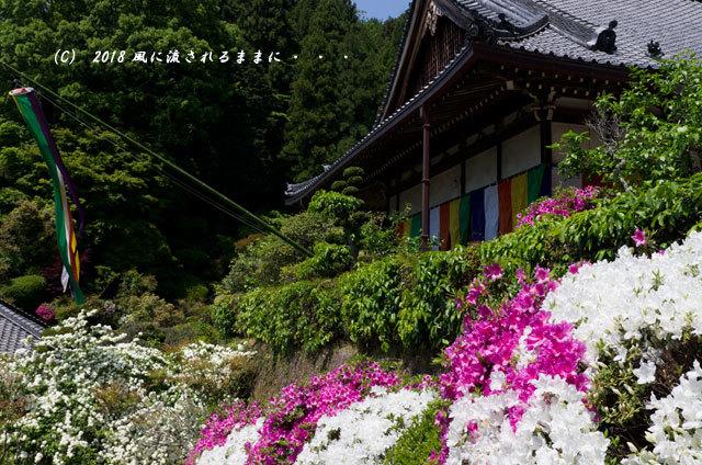 奈良・船宿寺 ツツジが咲き誇る庭園5