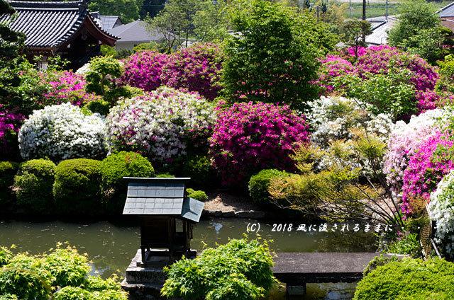 奈良・船宿寺 ツツジが咲き誇る庭園8