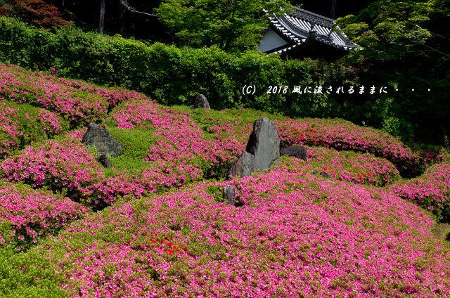 大阪・林昌寺(りんしょうじ) サツキ咲く庭園1