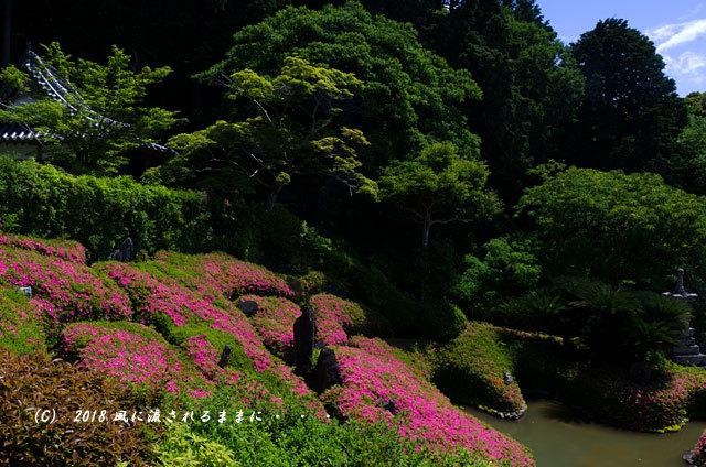 大阪・林昌寺(りんしょうじ) サツキ咲く庭園10