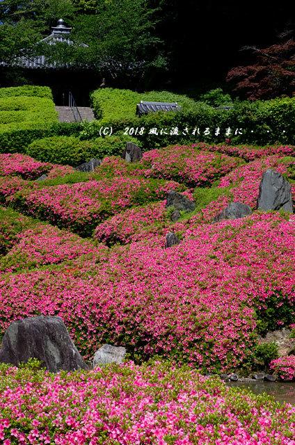 大阪・林昌寺(りんしょうじ) サツキ咲く庭園2