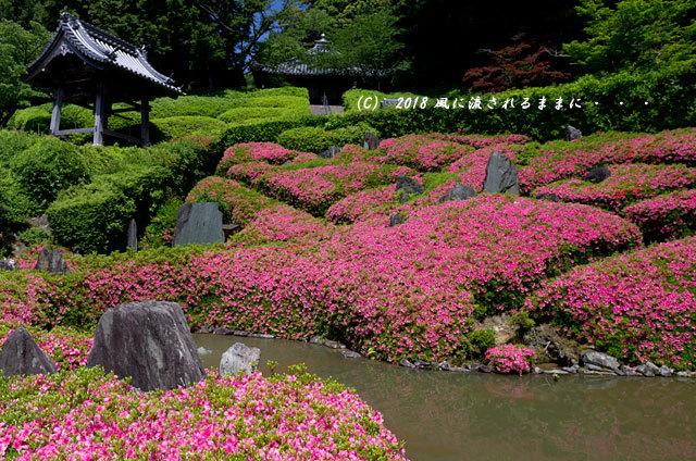 大阪・林昌寺(りんしょうじ) サツキ咲く庭園6