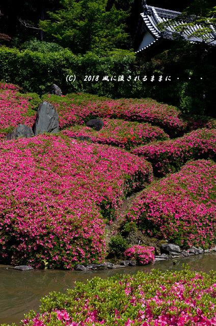 大阪・林昌寺(りんしょうじ) サツキ咲く庭園7
