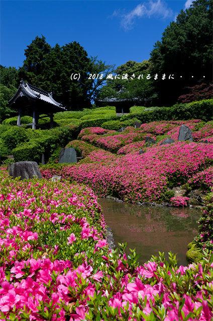 大阪・林昌寺(りんしょうじ) サツキ咲く庭園8