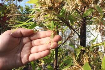 5051-340竹の花