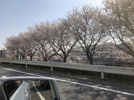 3282018 府中町近辺桜並木S1