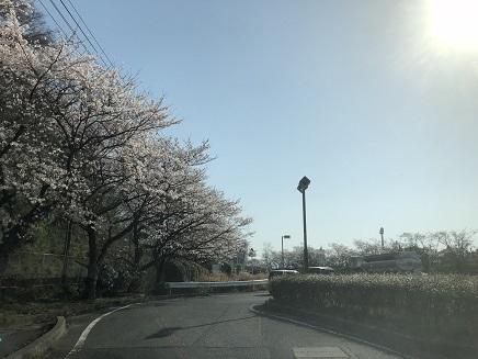 3282018 坂国道桜並木S2