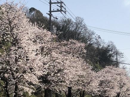 3282018 坂国道桜並木S21