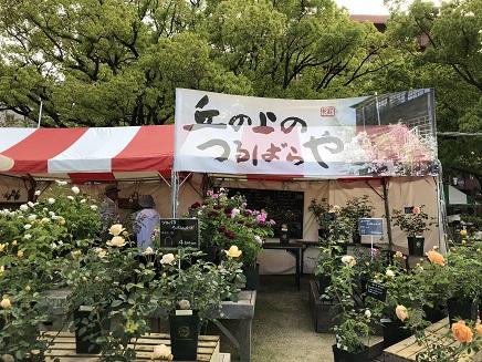 5202018 福山ばら祭ばら公園S11