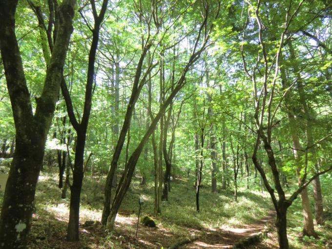 登山口付近は緑一色