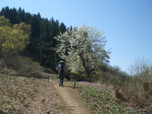 桃の木平を歩く