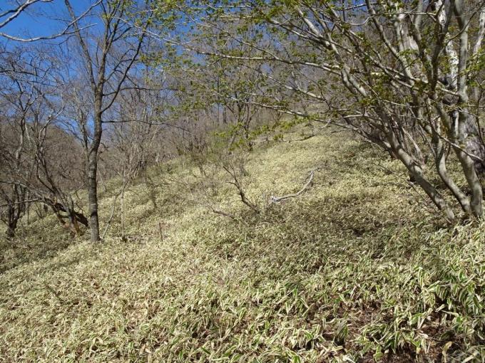 笹原、うすい踏み跡