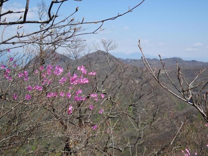 アカヤシオと鈴ヶ岳と鍬柄山