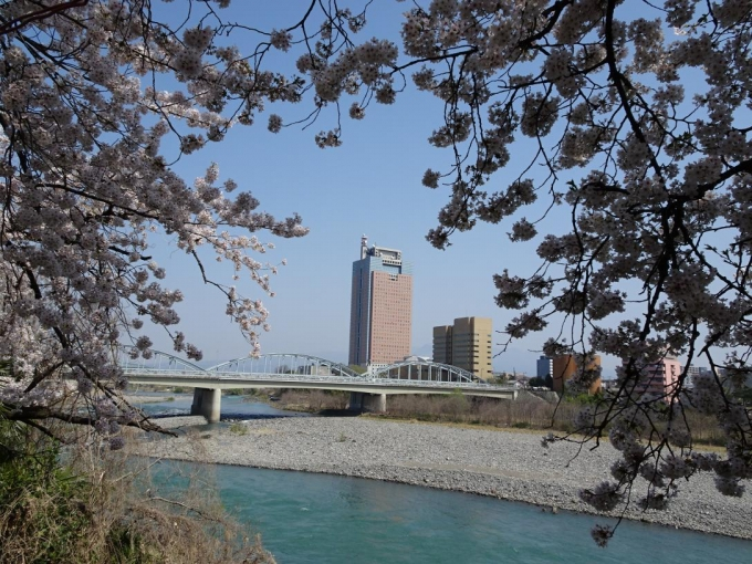 石倉桜並木2(群馬大橋と群馬県庁舎)