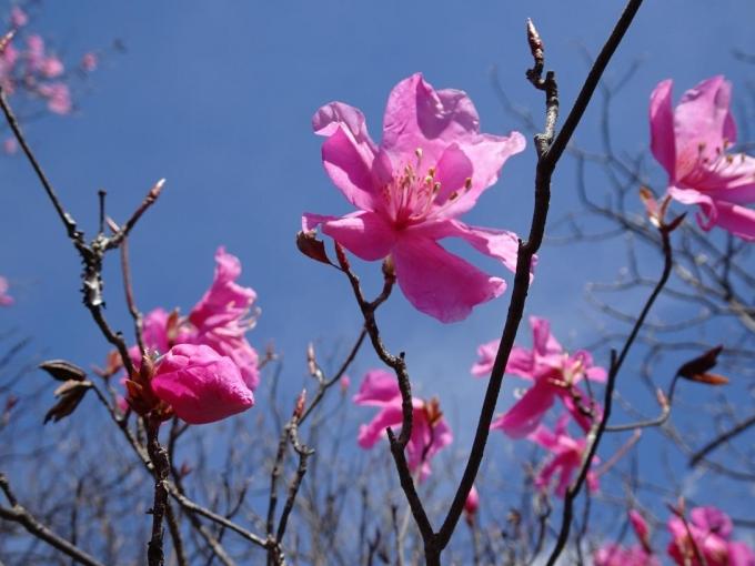 咲きたて2