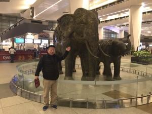 ゾウの出迎え