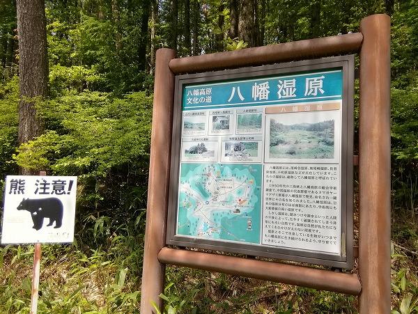 尾崎沼湿原7