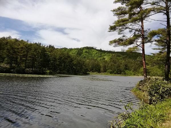 尾崎沼湿原8