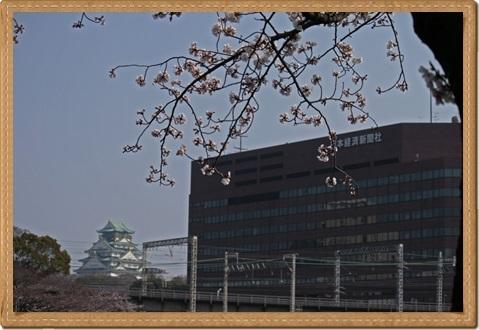 桜 ブログ用3
