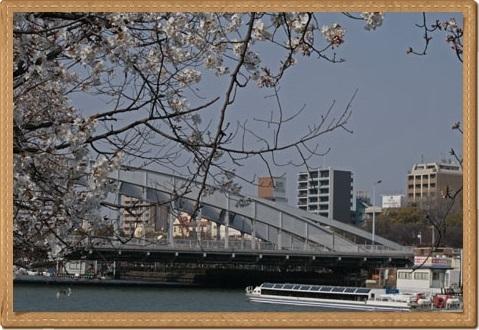 桜 ブログ用4