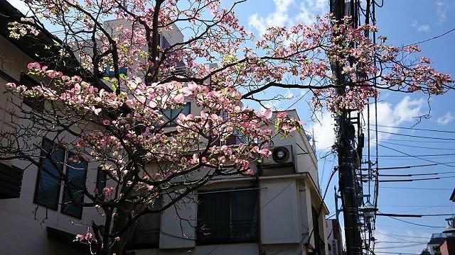 180408hanamizuki.jpg