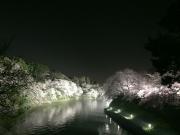 夜の千鳥ヶ淵
