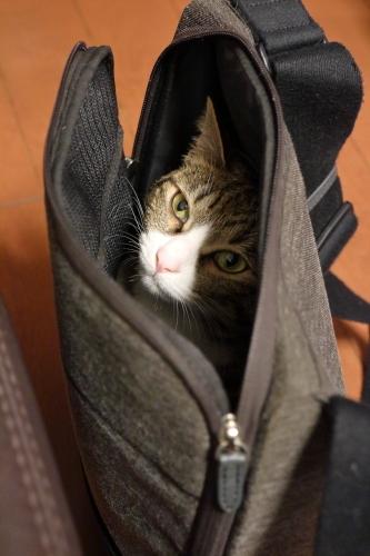 かばんの中