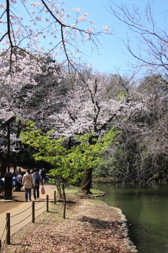 善福寺公園2