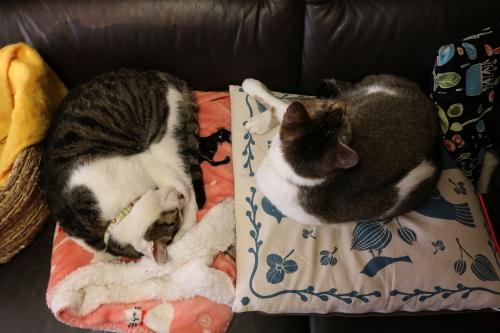 ふたりで寝2