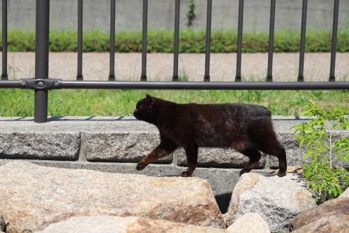黒猫てくてく
