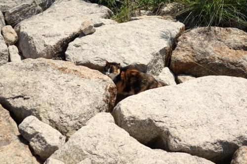 岩場に隠れる