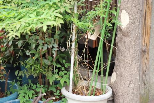 植木鉢の陰