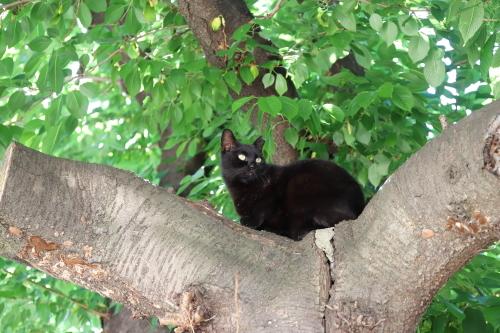 木の上のクロ