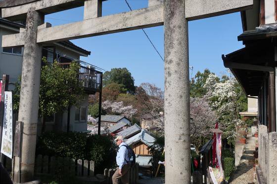 yoshinoyama-2-12