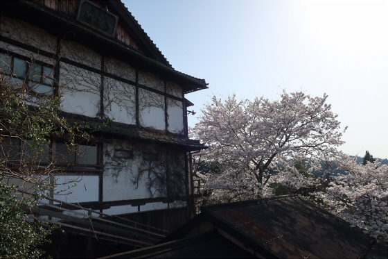 yoshinoyama-3-01