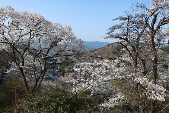 yoshinoyama-3-19