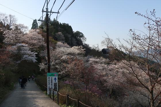 yoshinoyama-3-24