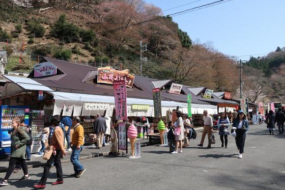 Yoshinoyama-sakura05