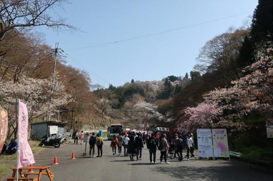 Yoshinoyama-sakura06