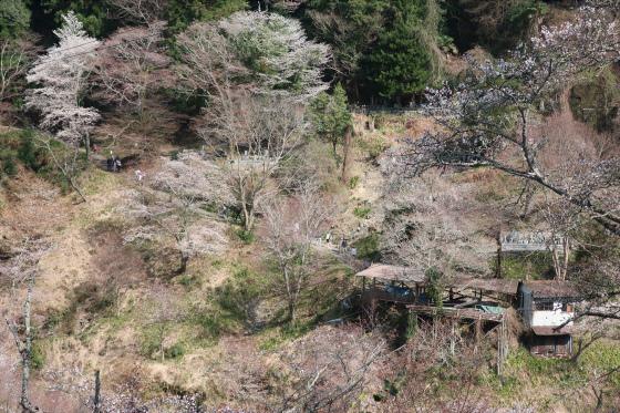 Yoshinoyama-sakura25