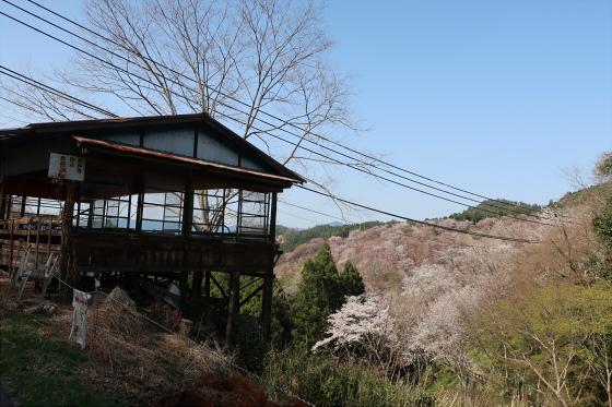 Yoshinoyama-sakura29