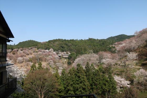 Yoshinoyama-sakura32