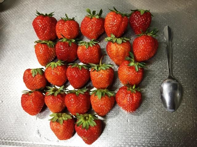 大き目なイチゴ