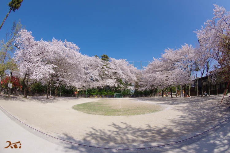 201803631桜_冠神社16