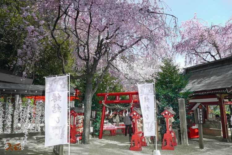 201803631桜_冠神社09