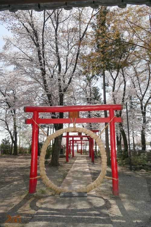 201803631桜_生品神社08