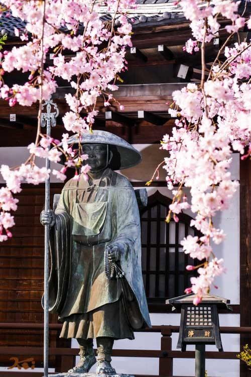 201803631桜_常楽寺19
